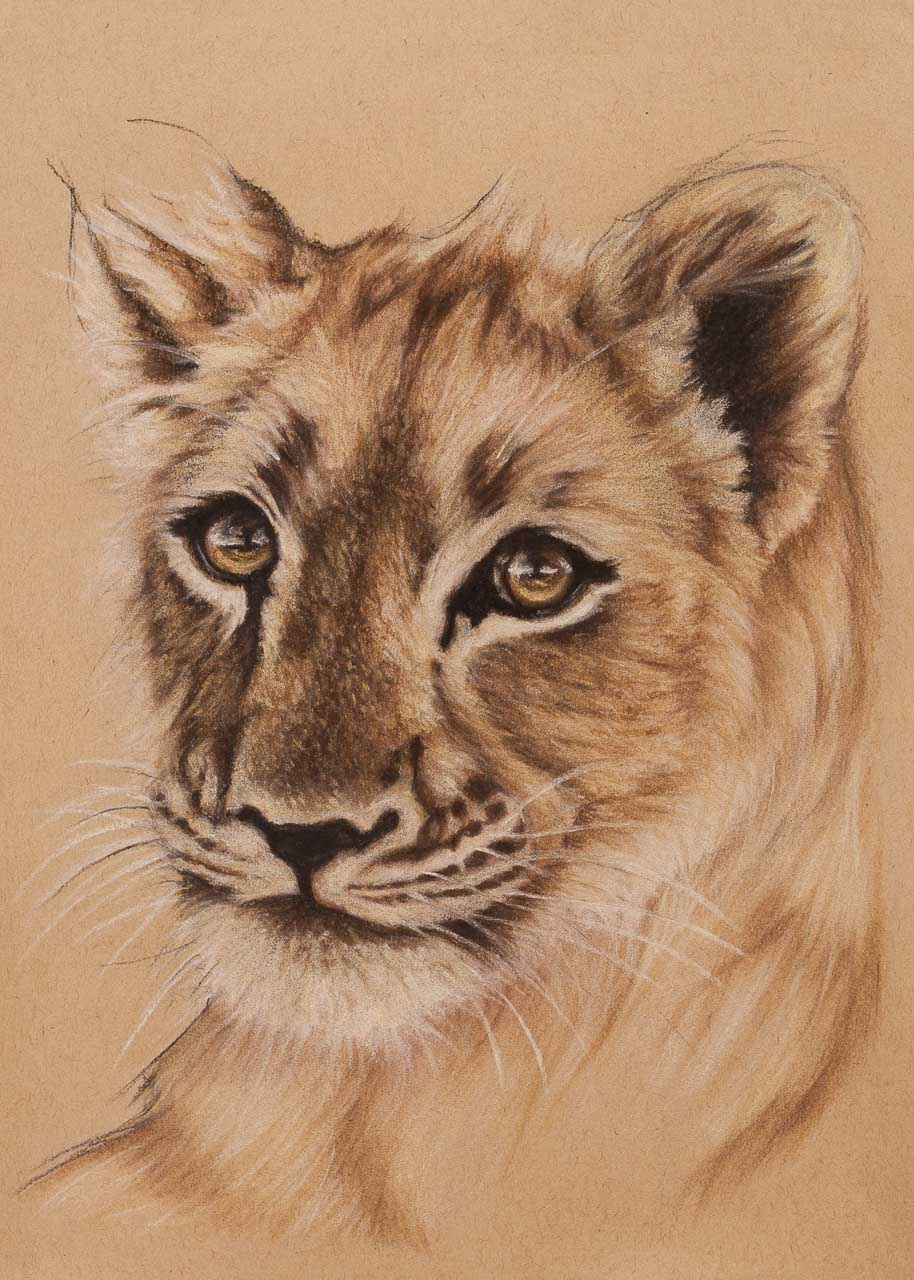 lion cub pastel drawing