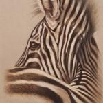 zebra profile drawing