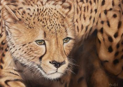 """""""Aureus"""" oil painting of cheetah by Wendy Beresford"""
