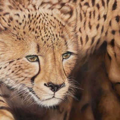 """Aureus"" oil painting of cheetah by Wendy Beresford"