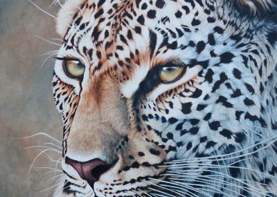 "Original Oil painting of leopard portrait ""Deep Focus"" by Wendy Beresford"