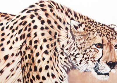 """""""Diesel"""", oil painting of cheetah, by Wendy Beresford"""
