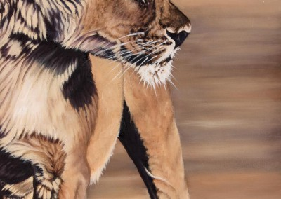"""Evening Patrol"", Lioness in evening light, original oil painting by Wendy Beresford"