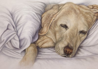 """Fridy"", labrador portrait, original oil painting by Wendy Beresford"