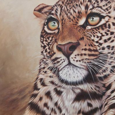 """Provoked"", young leopard portrait in oils by Wendy Beresford"