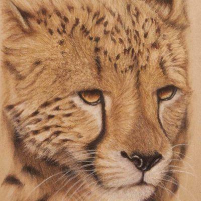 Cheetah portrait, original pastel drawing by Wendy Beresford, on Strathmore Artist paper