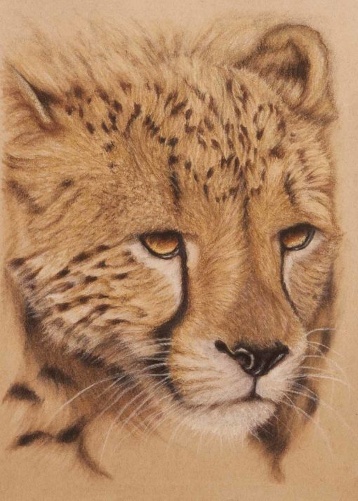 Cheetah portrait, original pastel drawing by Wendy Beresford, on Strathmore Artist paper