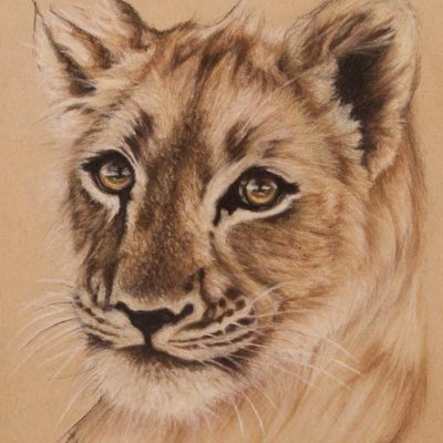 Lion cub portrait, original pastel drawing on Strathmore Artist paper, by Wendy Beresford