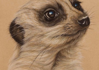Meerkat portrait, original pastel drawing on Strathmore Artist paper by Wendy Beresford