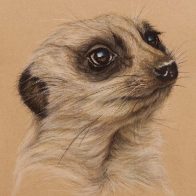 Meerkat portrait, original pastel drawing on Strathmore Artist paper by Wendy Beresford