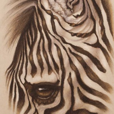 Zebra eye closeup, original pastel drawing on Strathmore Artist paper by Wendy Beresford