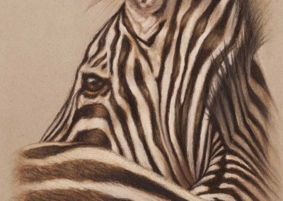 Zebra profile, original pastel drawing on Strathmore Artist paper by Wendy Beresford