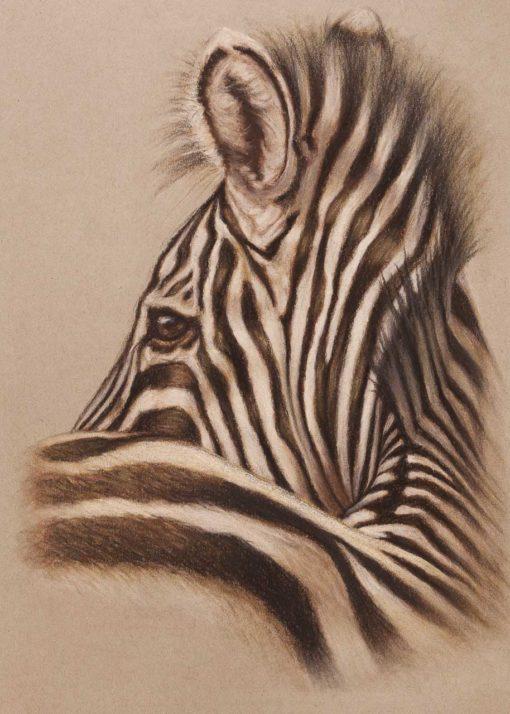 Zebra profile, original pastel drawing on Strathmore Artist paper by Wendy Beresford
