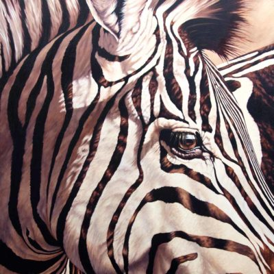 """Their Perspective"" by Wendy Beresford, oil painting zebra portrait"