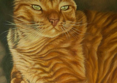 """Bugsy"", commissioned portrait of ginger cat, original oil painting by Wendy Beresford"