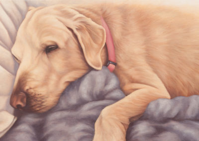 """Jay"", commissione portrait of a labrador, original oil painting by Wendy Beresford"