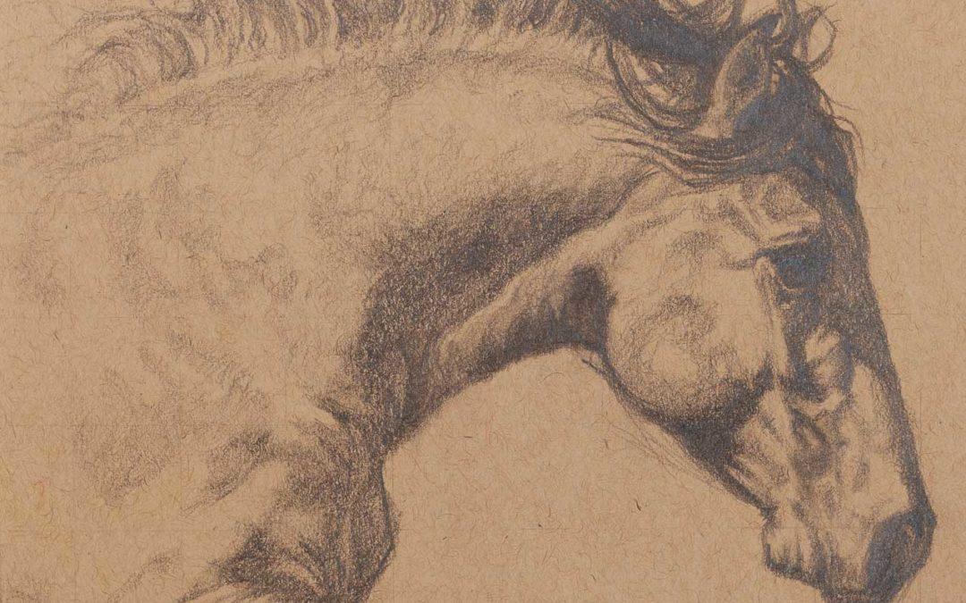 Graphite Equine 1