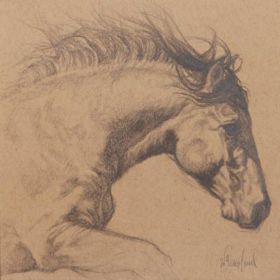 """Taking Flight"" Graphite drawing by Wendy Beresford on Strathmore Artist Paper"