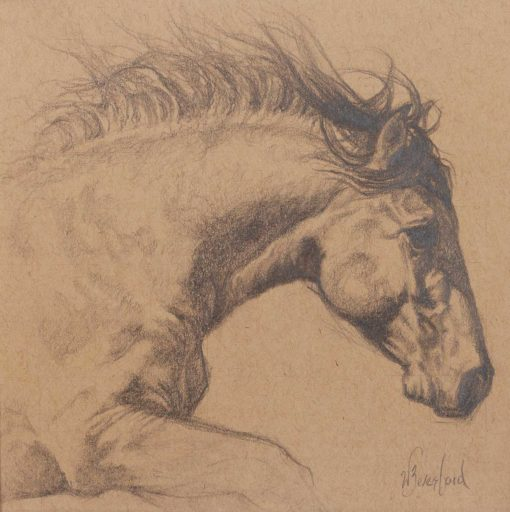 Graphite drawing by Wendy Beresford, Graphite Equine 1, on Strathmore Artist Paper, available mounted in white