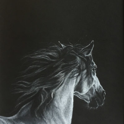 Pastel drawing by Wendy Beresford, white pastel on black paper, Pastel Equine 1
