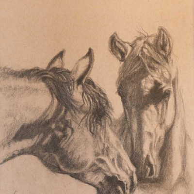 """Overtures"" graphite drawing of two horses on Strathmore Artist paper by Wendy Beresford"