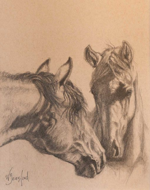 Graphite drawing of two horses on Strathmore Artist paper by Wendy Beresford