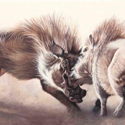 """Show Me Your Teeth"", two warthogs sparring, original oil painting by Wendy Beresford"