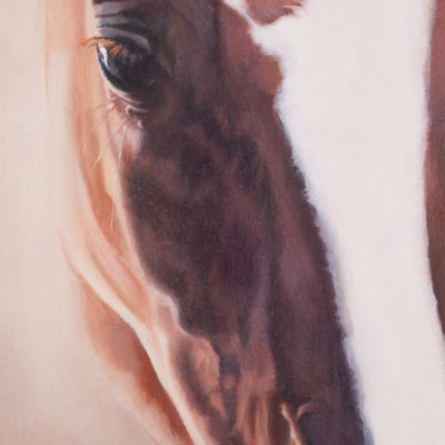 Close up portrait of chestnut horse with white blaze, oils on canvas, by Wendy Beresford Art